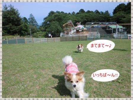 CIMG0441_20120617234304.jpg