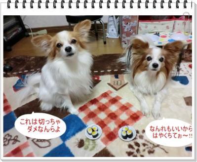 CIMG9940_20120203232508.jpg