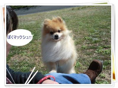 CIMG9946_20120411215203.jpg