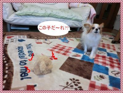 CIMG9949_20120213215622.jpg
