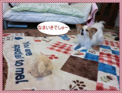 CIMG9951_20120213215922.jpg