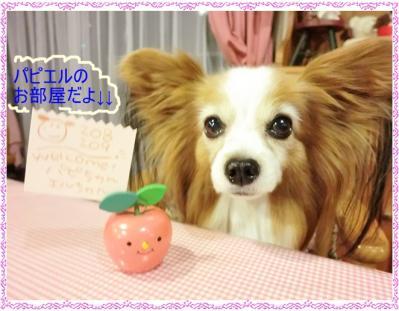 CIMG9992_20120107001626.jpg