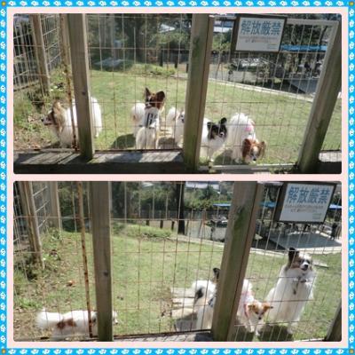 cats_20111031222928.jpg