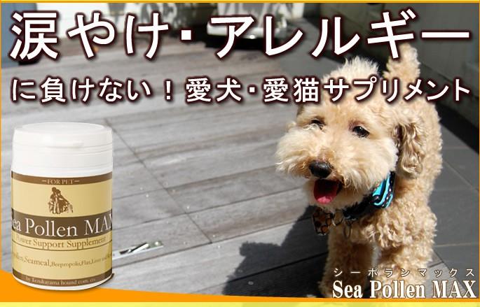 s-n-sea01.jpg