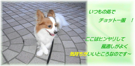 0-3-5 u 散歩JPG