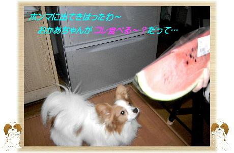 003-U スイカ