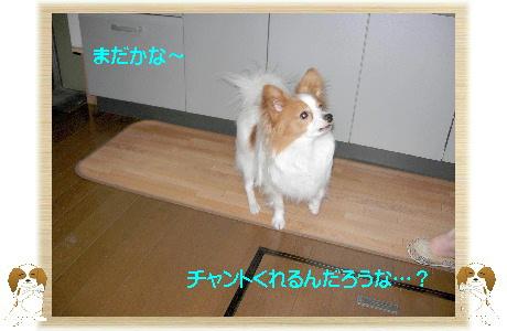 008-U スイカ