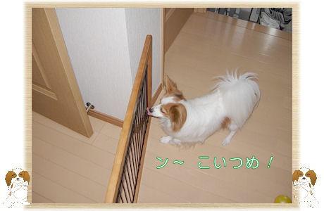 009-U-B ン~コンニヤロ~