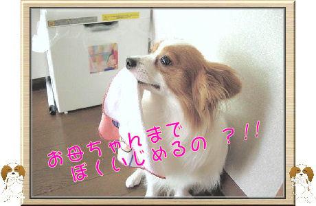 オイタ 006-U-B