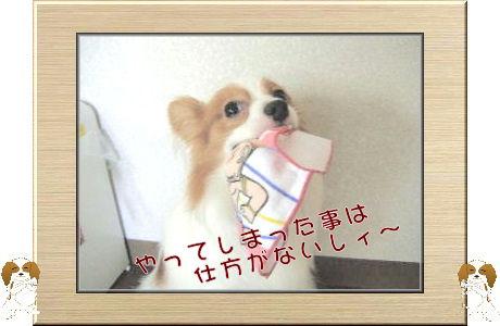 オイタ 003-U-B