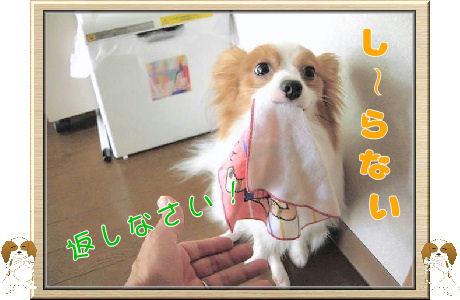 オイタ 008-U-B