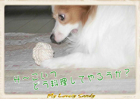 011 ボール遊び U