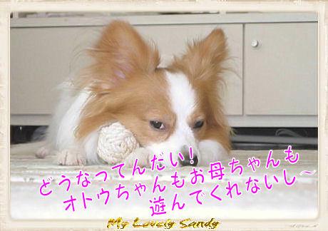 014 ボール遊び U