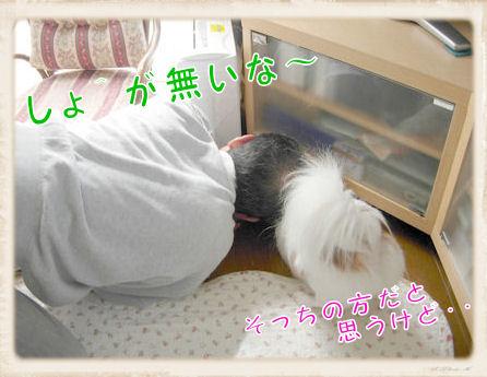 003 ボール遊び (432×324) U