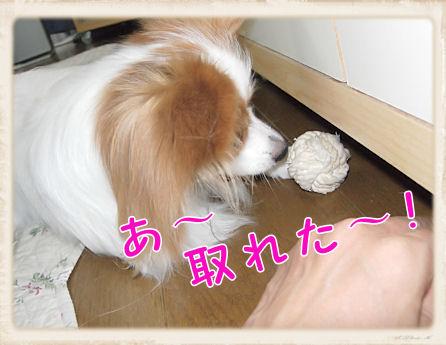 018 ボール遊び U