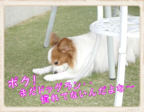 005 Dog Run U