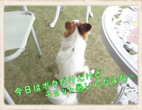 006 Dog Run  U