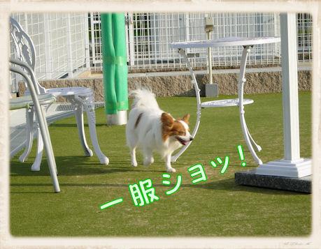 012 Dog Run