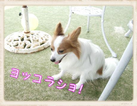 015 Dog Run