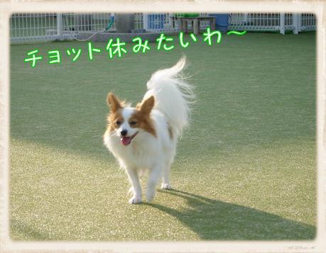 011 Dog Run