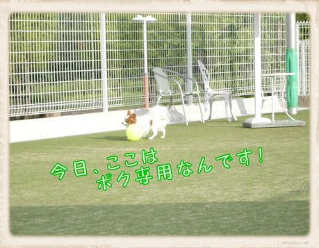 009 Dog Run