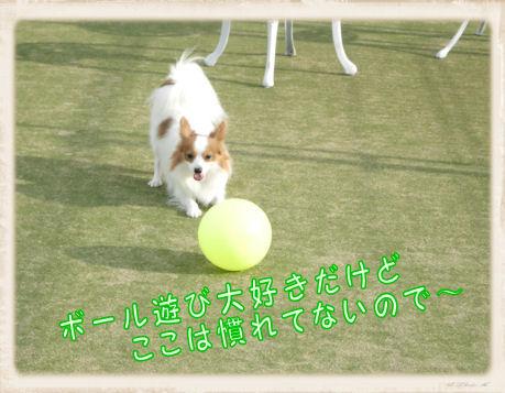 008 Dog Run