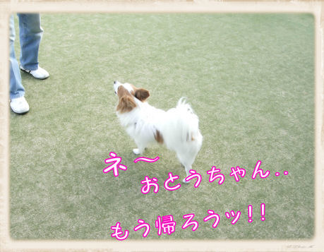 023 Dog Run