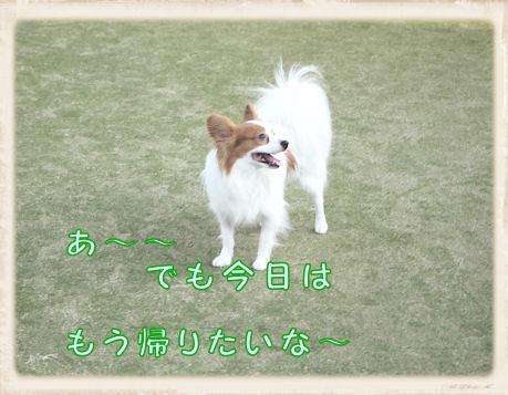 022 Dog Run