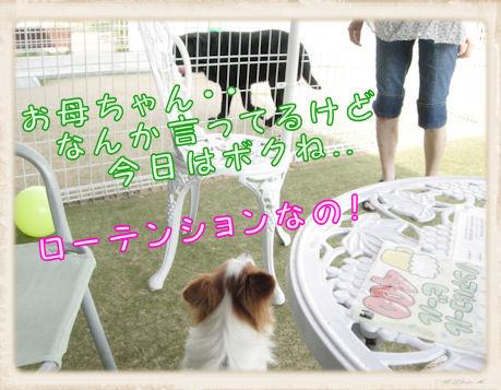 016 Dog Run