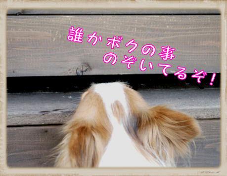 018 Dog Run  (2)