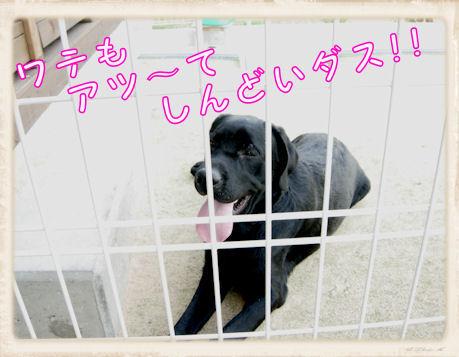 017 Dog Run