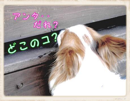 019  Dog Run