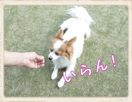 025 Dog Run