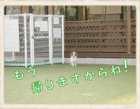 026 Dog Run