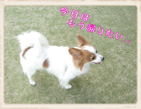 024 Dog Run
