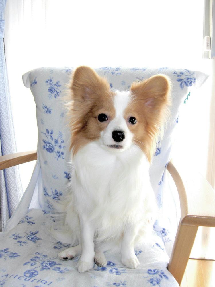 ワ~イ、パパの椅子を占拠しました !