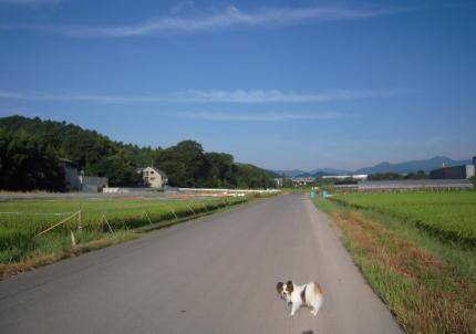 inakamichi3.jpg