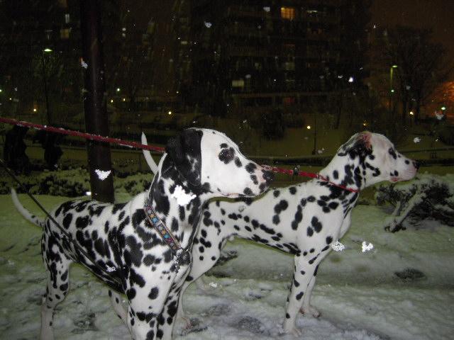雪遊び 019