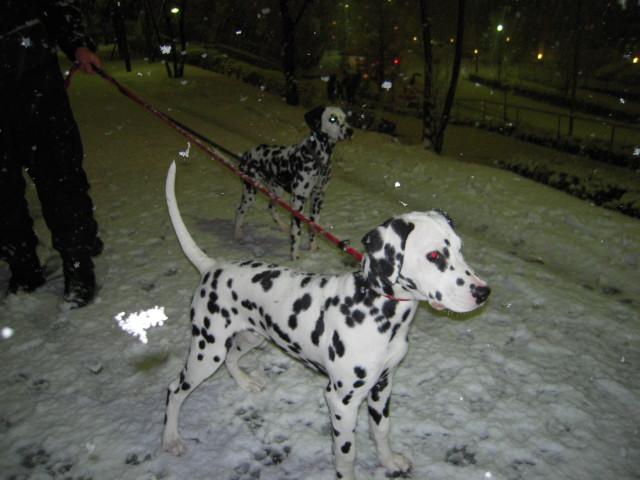 雪遊び 017