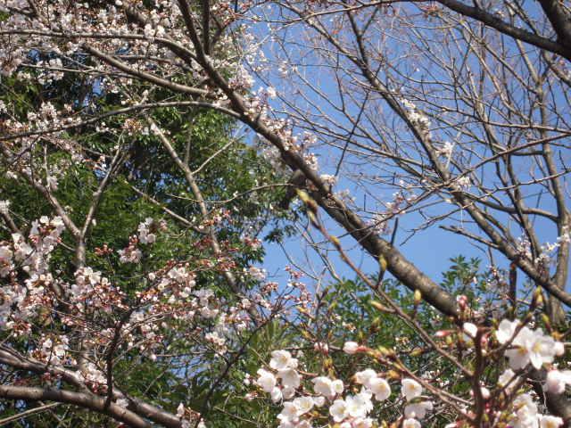桜とマグその後 014