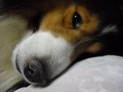 ボク昼寝2