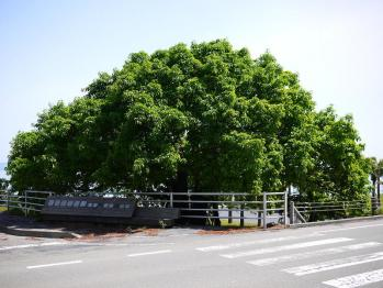 桜島 068