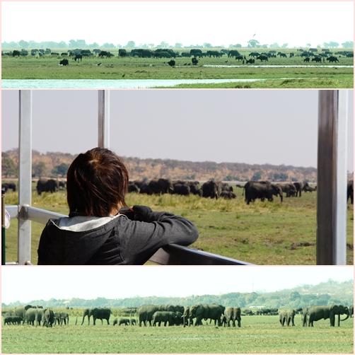 24象の群れ