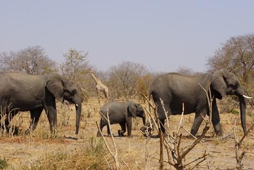 20象の親子