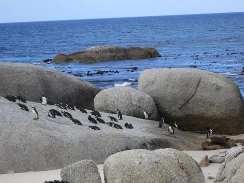 46ペンギン
