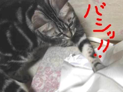 snap_pasiyuru_20112344344.jpg