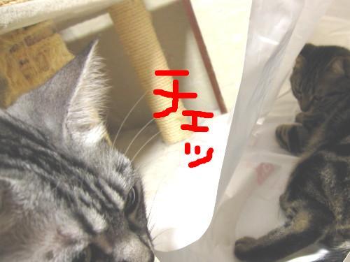snap_pasiyuru_20112344848.jpg
