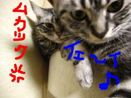 snap_pasiyuru_20112415445.jpg