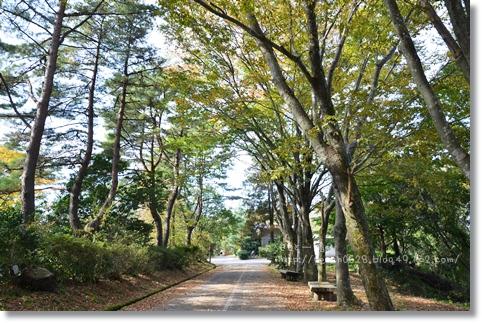 森林公園2013秋 184