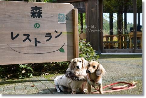 森のレストラン 2013秋 008